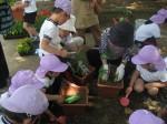 ナス、ミニトマトやパプリカを植えたよ!
